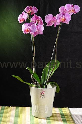Obal orchidea 244-13GY